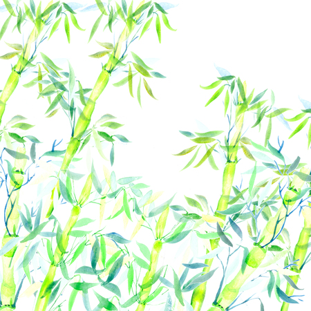 the card green bamboo chinese plant watercolor illustration Imagens
