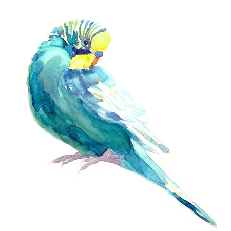 wavy parrot blue with a yellow head watercolor illustration