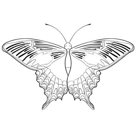 coloring butterfly Papilio maackii tropical vector illustration Ilustrace