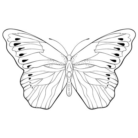 coloring Indonesia exotic Butterfly Hebomoia Leucippa vector illustration Ilustrace