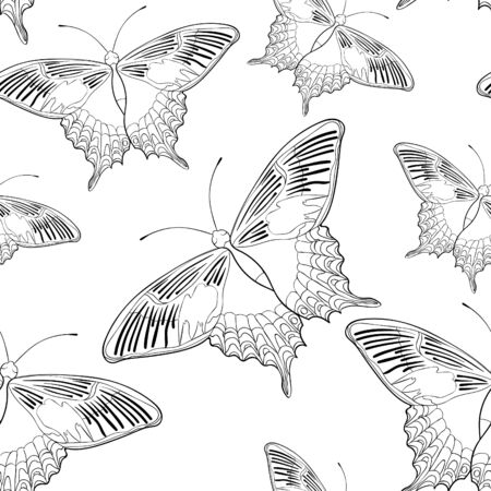 coloring seamless pattern  butterfly Papilio maackii tropical vector illustration