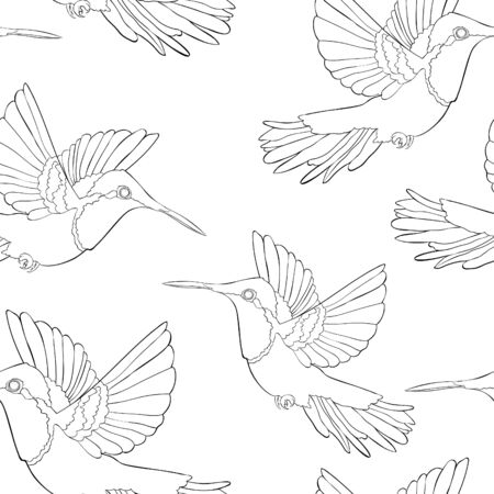 coloring seamless pattern Hummingbird Chrysolampis mosquitus Ruby bird small  vector illustration