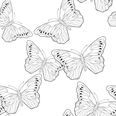 coloring seamless pattern Indonesia exotic Butterfly Hebomoia Leucippa vector illustration