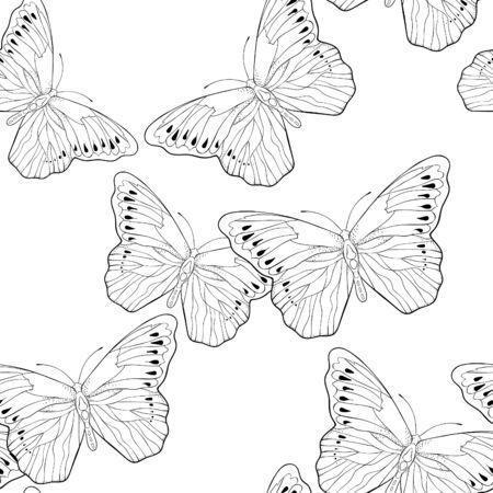 Modèle sans couture à colorier Indonésie papillon exotique Hebomoia Leucippa vector illustration