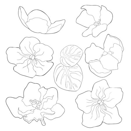 coloring set Violet flower of pansies  vector illustration Ilustrace
