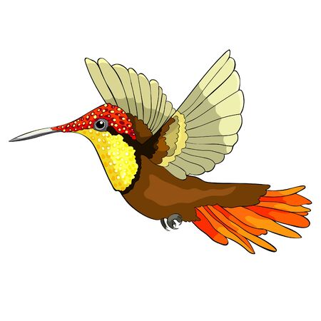 Hummingbird Chrysolampis mosquitus Ruby bird small  vector illustration Illustration