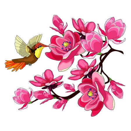 Hummingbird Chrysolampis mosquitus Ruby on flowering magnolia branch vector illustration