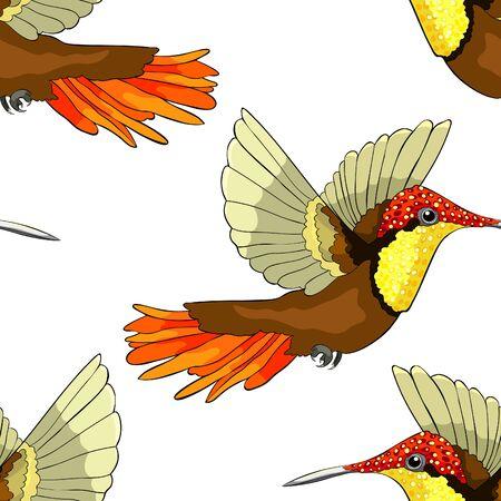 seamless pattern Hummingbird Chrysolampis mosquitus Ruby bird small  vector illustration Illustration