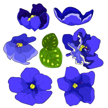 set Violet flower of pansies  vector illustration Ilustrace
