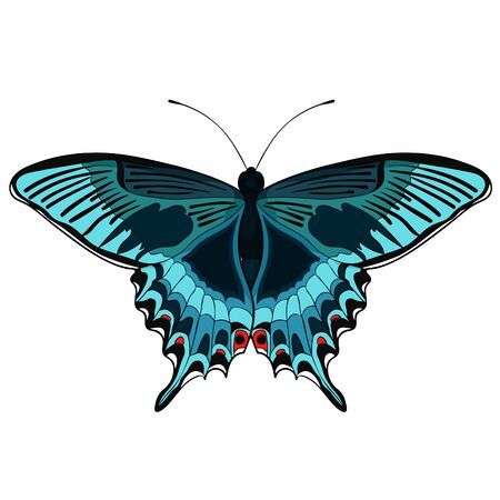 the butterfly Papilio maackii tropical vector illustration