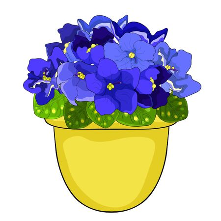 the Violet flower of pansies in a pot home  vector illustration Ilustrace