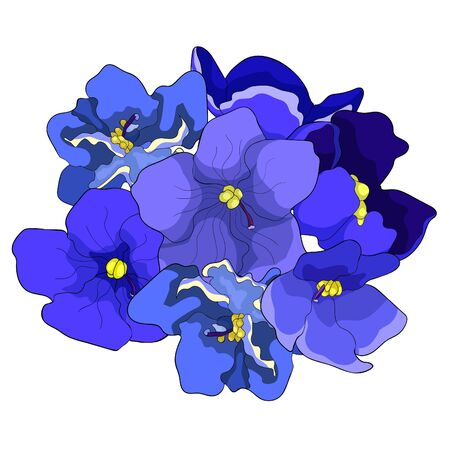 the Violet flowers of pansies  vector illustration