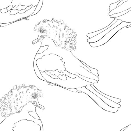 coloring seamless pattern Bird King Crowned Pigeon vector illustration