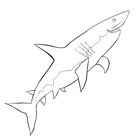 coloring water predatory fish shark vector illustration