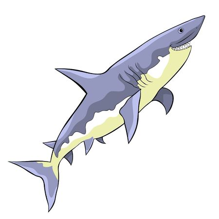 the water predatory fish shark vector illustration 矢量图像