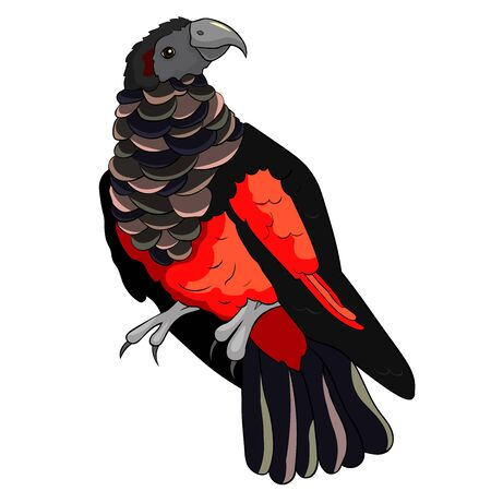 Bird eagle black-red bristle-headed griffin parrot vector illustration