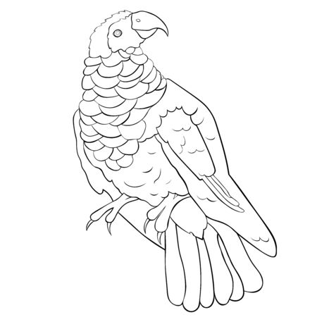 coloring  eagle black-red bristle-headed griffin parrot vector illustration 矢量图像
