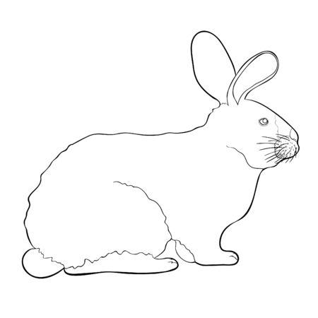 coloring home pet Californian rabbit vector illustration