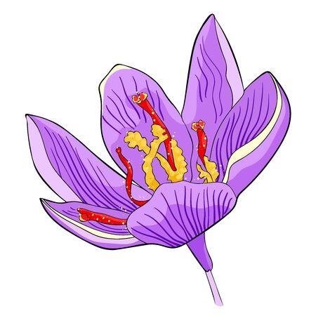 Le printemps est l'illustration vectorielle de fleur de safran