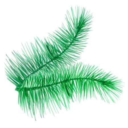 branch of green needles of a Christmas tree. watercolor illustration 免版税图像