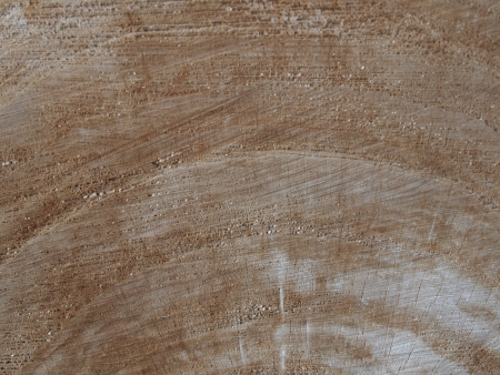 albero: Closeup of cut tree to use as a background