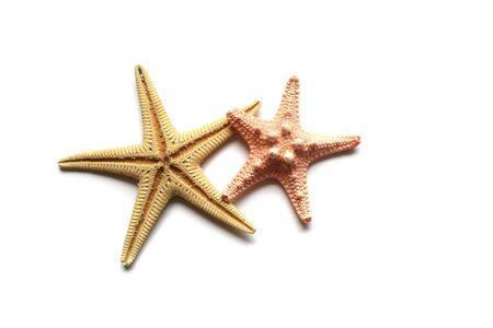 Seashells from holiday on white background photo