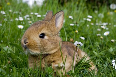 bugs bunny: Easter Rabbit on fresh green grass