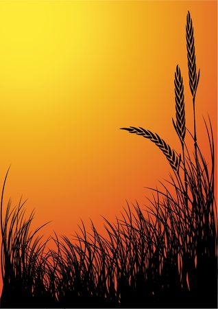 pasturage: rye silhouette vector background - sunset Stock Photo