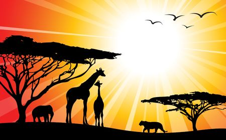 field sunset: Africa  safari - silhouettes of wild animals in twilight