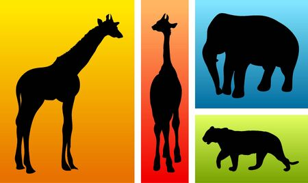 Animals from safari  zoo on colorful backgrounds photo