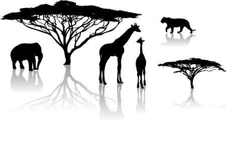 giraffe silhouette: Silhouettes of animals from safari  zoo