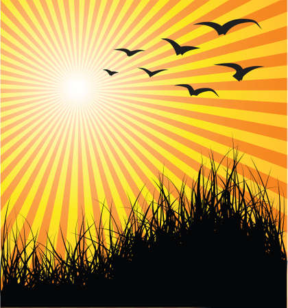 pasturage: Summer vector background - grass, birds and sunset Stock Photo