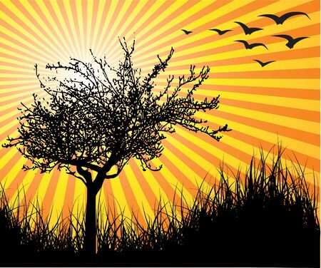 Vector tree with sunset on the background photo