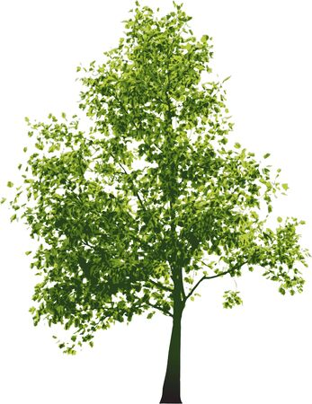 Vector green tree - isolated on white background Stock Photo - 3281560