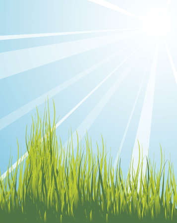 Spring meadow with green grass and blue sky Stock Photo - 3533397