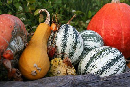 Halloween pumpkins still-life with natural background photo