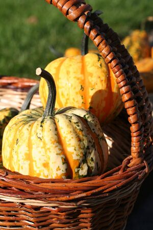 Pumpkins still-life with natural background photo