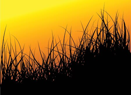 Green grass background - sunset Stock Photo - 5740890