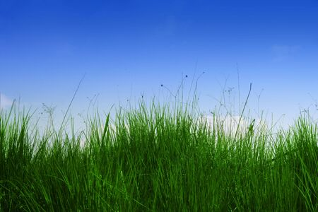 Fresh green grass with blue sky Stock Photo - 5740500