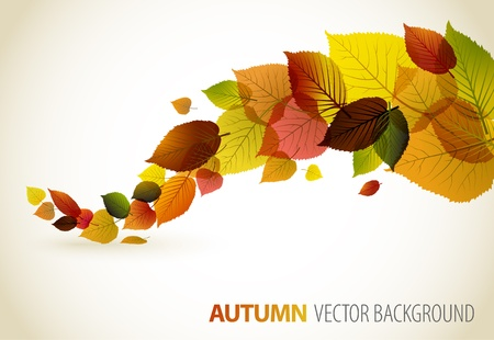 autumn leaf frame: Autumn abstract floral background with place for your text