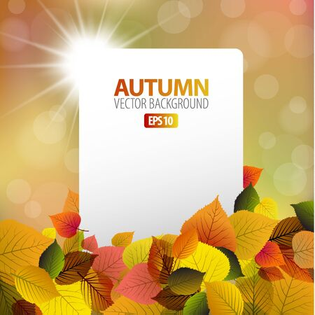 sunrays: autumn background with white card and sun in the background Illustration