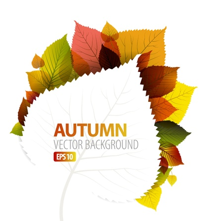 fall background: Autumn abstract floral background with place for your text