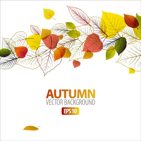 autumn leaf frame: Vector Autumn abstract floral background with place for your text