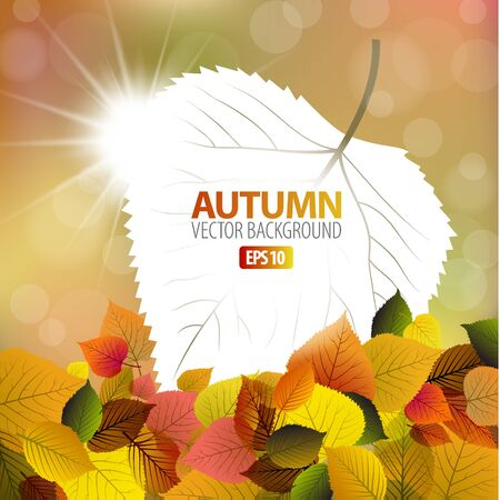 sunrays: Vector autumn background with white card and sun in the background
