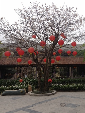 Red lanterns on tree Stock Photo