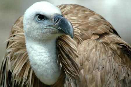 Bird of prey Stock Photo - 18488543