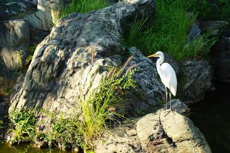 japanese garden and egret photo