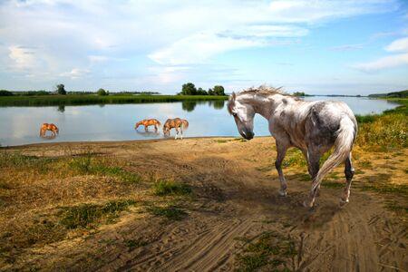 caballo bebe: Caballo caluroso día de ir al río