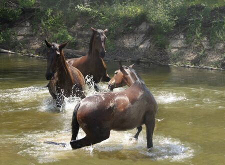 water play: wild horses in the water play catch-up