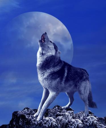 月と夜空の背景に狼の遠吠え